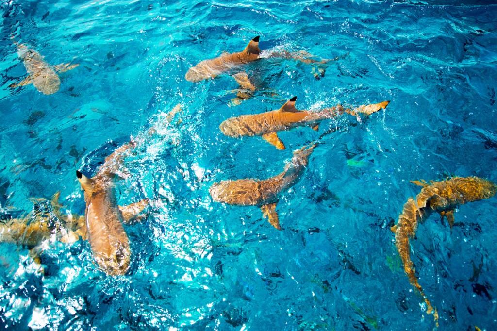 Jamey Price - Bora Bora