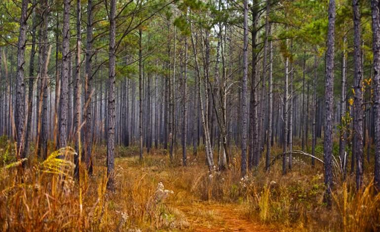 Carolina Conservationists