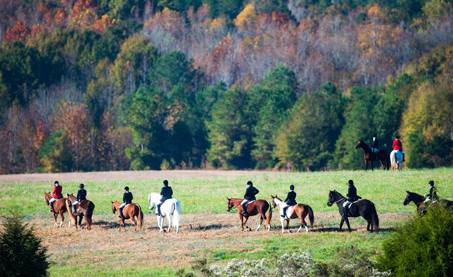 Mecklenburg Hounds