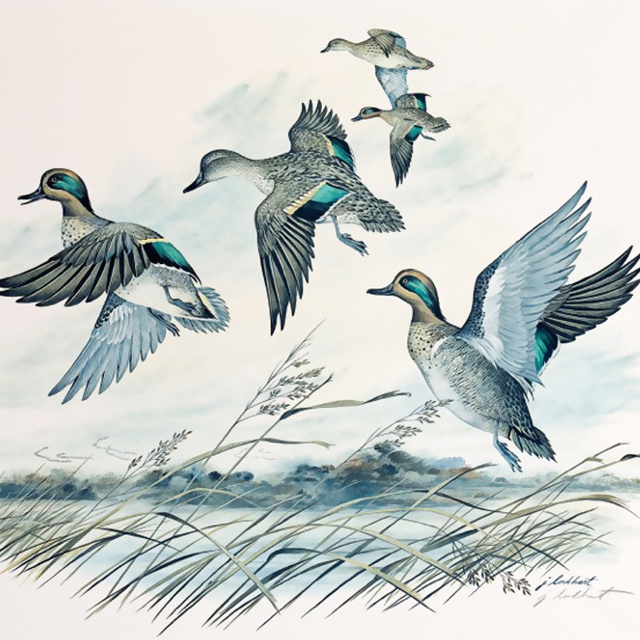 Ducks Unlimited Charlotte
