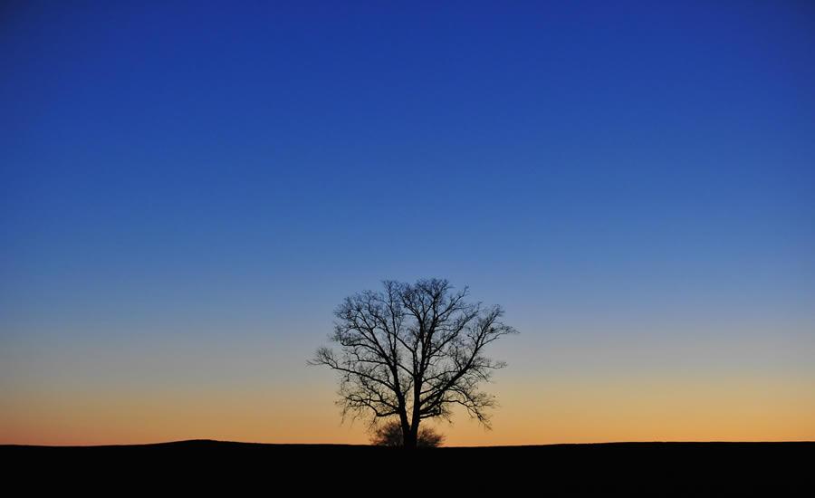 TreesCharlotte