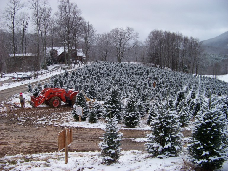Photo Via C J Christmas Tree Farms