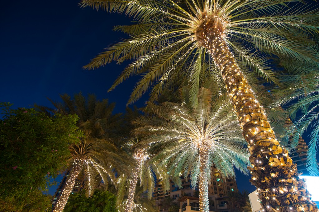 Charleston palmettos decorated for the holidays