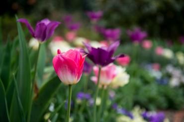 Charlotte spring