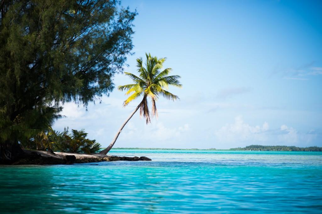 April 10-18, 2017, Bora Bora, French Polynesia: Palm tree