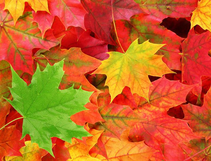 Fall Chapel Hill