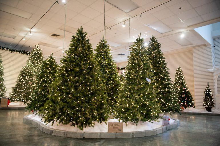 Charlotte Christmas Trees