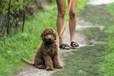 Charlotte dog friendly