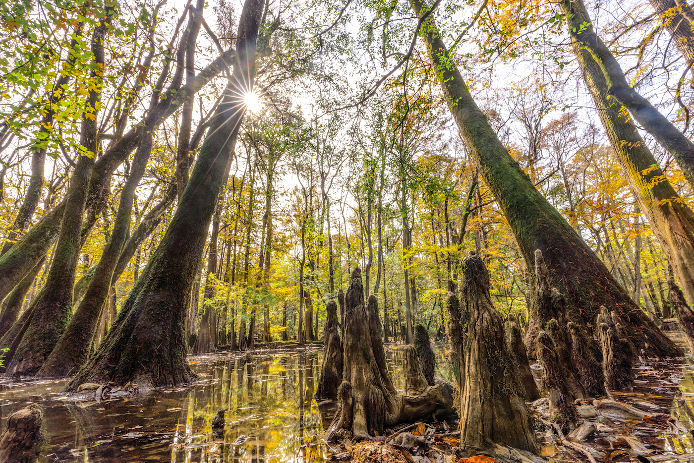 congaree national forest