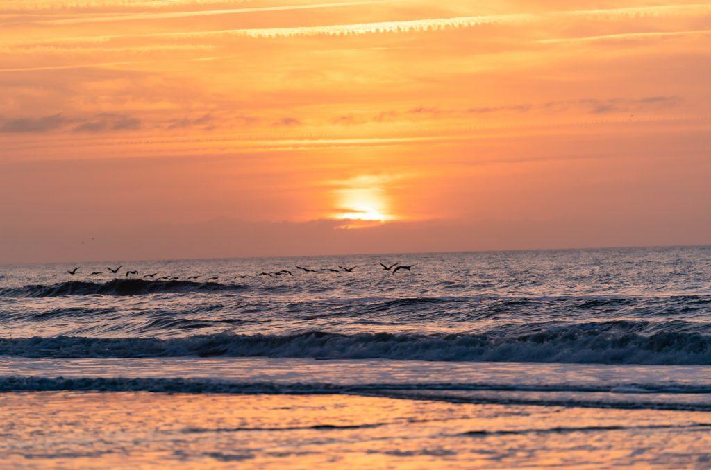 Folly Beach, NC and SC Beaches