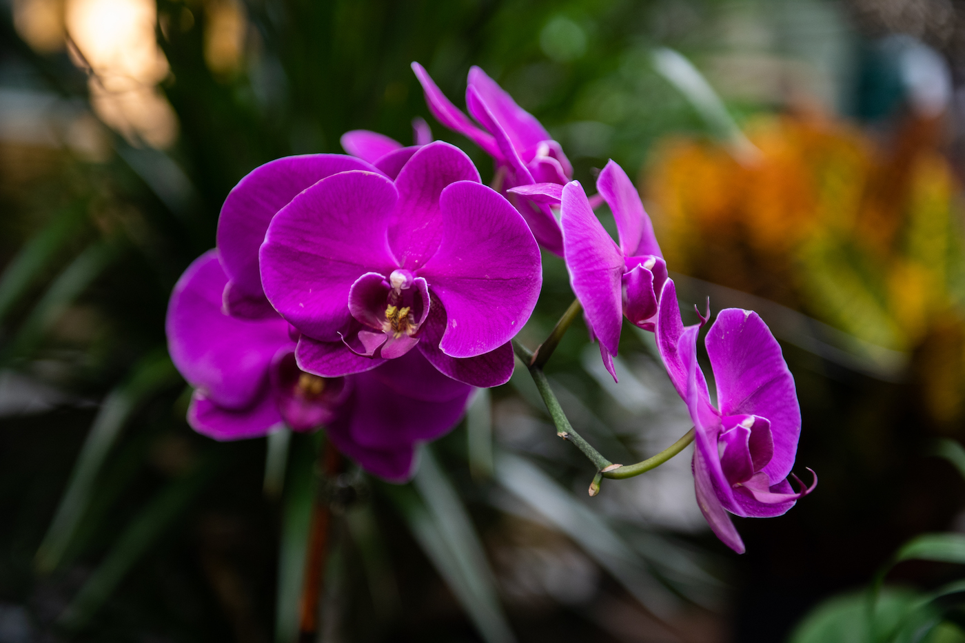 house plants charlotte nc