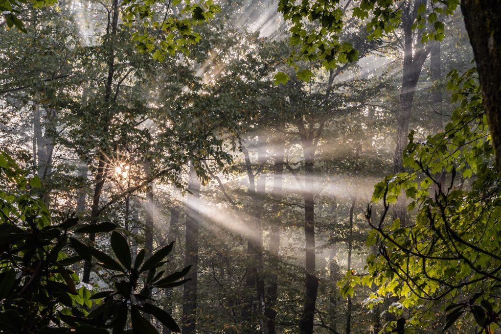 sun streaming through trees
